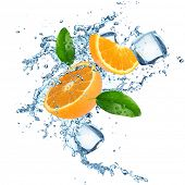 Fresh oranges in water splash. Isolated on white background.