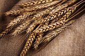picture of fall-wheat  - Ears Of Wheat Over Linen Background - JPG