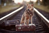 image of dogging  - Dog on rails with suitcases - JPG