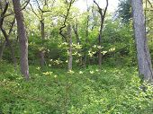 picture of starving  - Young and next generation of trees in spring at Starved Rock State Park - JPG