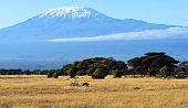 foto of kilimanjaro  - Mount Kilimanjaro in the African savannah in Kenya - JPG