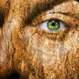 pic of smut  - Conceptual image of a face with a bark brown skin - JPG