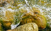 picture of h20  - Shallow water on coast of lake  - JPG