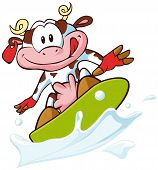 foto of milkman  - cow surfing on a milk wave  - JPG