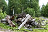 picture of deforestation  - deforestation forests before building new city region - JPG