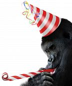 stock photo of party hats  - Big gorilla wearing a red and white striped party hat and blowing a noisemaker - JPG