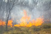 foto of dangerous  - Tropical forest fire alarming and dangerous threat to nature - JPG