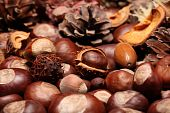 image of glans  - Different autumn decoration with nuts and fir cones - JPG