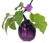 picture of aubergines  - Fresh purple aubergine on a branch isolated on white background - JPG