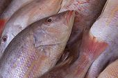 picture of red snapper  - Red snapper exposed on the market in ice - JPG