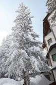 stock photo of wooden shack  - Fir tree covered with snow on a winter mountain beside or next to wooden houses or shacks huts on clear sunny day - JPG