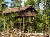 picture of tree house  - Papua Indonesia  - JPG