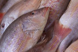 stock photo of red snapper  - Red snapper exposed on the market in ice - JPG