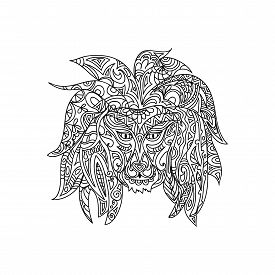 pic of lions-head  - Lion head coloring page isolated on white - JPG