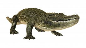 stock photo of crocodilian  - 3D digital render of an American alligator isolated on white background - JPG