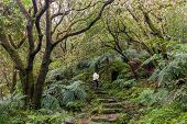 Man trekking in the subtropical forest of the Yangmingshan National Park, Taipei, Taiwan poster
