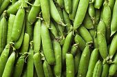 stock photo of sweetpea  - Green pea background - JPG
