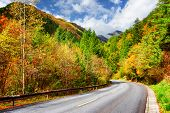Bending Road Among Colorful Fall Woods. Amazing Autumn Landscape poster