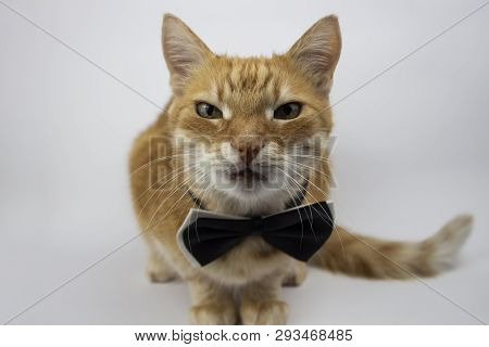 poster of Red Cat Looks Into The Camera. Pictures Of Cats, Cat Eyes, Cat Eyes, Cute Cat, Cat Drawings, Cat Dra
