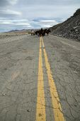 picture of feedlot  - Overland highway in Patagonia - JPG