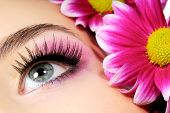 picture of pink eyes  - Close - JPG
