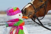 foto of arctic landscape  - Portrait of horse and snowman in winter landscape - JPG