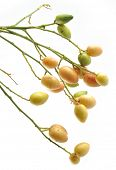 stock photo of lanzones  - Fruit in white background - JPG