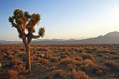 foto of clos  - beautiful desert at sunset with three - JPG