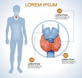Thyroid. Modern medical infographics. Internal organs in a human body. Anatomy of people