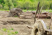 picture of logging truck  - Old trailer and logs somewhere in a forest - JPG