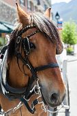 picture of bridle  - Closeup of the head of a horse on a bridle - JPG
