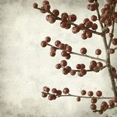 pic of winterberry  - textured old paper background with winterberry branches - JPG