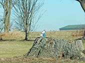 pic of gnome  - a gnome statue sits on a old tree stump watching over the yard - JPG