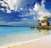 foto of willy  - Tropical beach - JPG