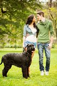 stock photo of schnauzer  - Young handsome heterosexual couple with a dog a black giant schnauzer enjoy a walk through the park - JPG