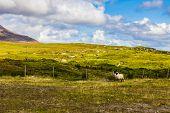 image of galway  - Connemara Irish countryside in County Galway green hills and sheep - JPG