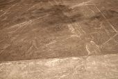 stock photo of geoglyph  - Unesco Heritage:  Lines and Geoglyphs of Nazca, Peru - heron