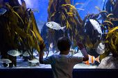 picture of algae  - Young man looking at fish and algae in a tank at the aquarium - JPG