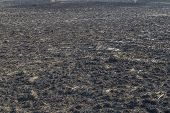 picture of prairie  - The charred remains following a prairie fire in Wisconsin - JPG