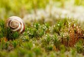 foto of snail-shell  - Snail shell on red and green moss - JPG
