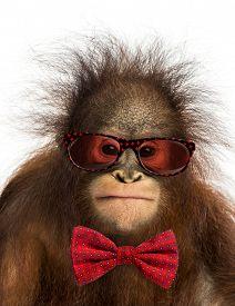 picture of orangutan  - Close - JPG