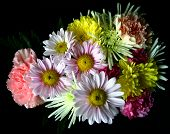 picture of daisy flower  - bouquet of flowers - JPG