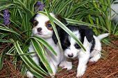 Outdoor Puppies poster