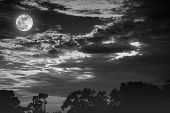 Sky With Clouds And Moon Above Silhouettes Of Trees. Serenity Nature Background. poster