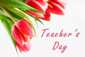 Happy Teachers Day With Tulip Flower, Message For Teacher In Special Day Of Education, Tulip Bouquet poster