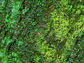 Green Lush Moss In Forest As Pattern Background. Colorful Bright Natural Moss Tree Texture. Dense Ha poster