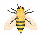 pic of honey-bee  - Illustration of honey bee isolated on white background - JPG
