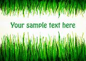 foto of drow  - green grass drowing upside and from bottom with text space - JPG