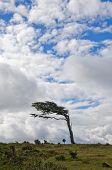 stock photo of tierra  - Wind - JPG