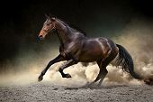 stock photo of arabian horse  - Horse run gallop with clouds of dust